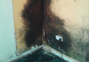 condensation black mould